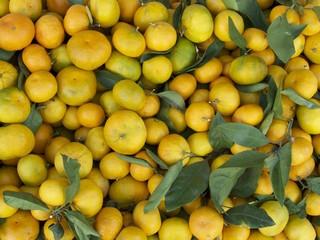 Reifende Mandarinen in einem Geschäft im türkischen Bodrum