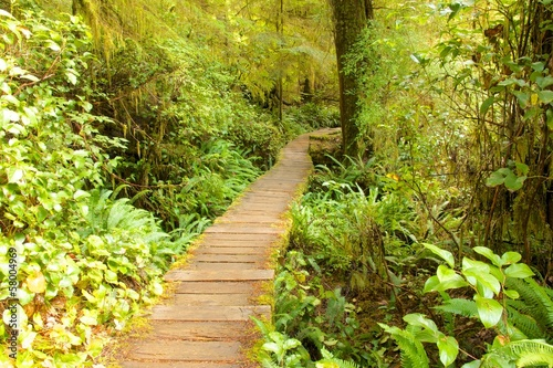 Rain Forest Boardwalk
