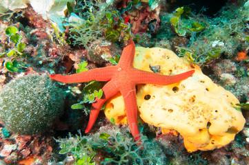 Starfish and Sponge underwater