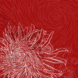 Invitation or greeting card with chrysanthemum