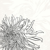 Monochrome invitation or greeting card with chrysanthemum