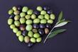 Cuore di olive e ramo d' ulivo 2
