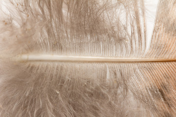 background of a feather. Macro