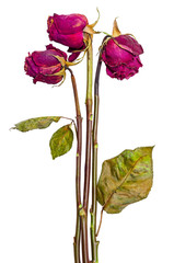 Bouquet of three dried roses