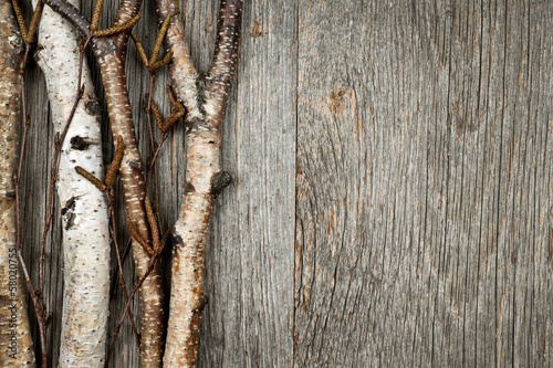 Birch branches background