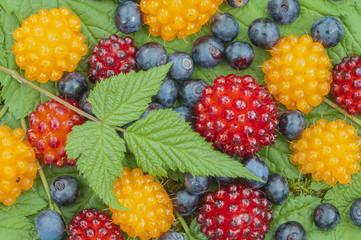 Wild Alaskan berries