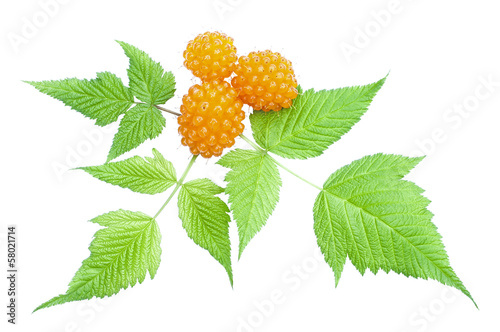 Orange salmonberry and leaves
