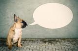 ein Hund möchte etwas sagen