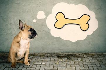 Französische Bulldogge denkt an einen Knochen
