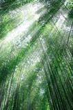 Fototapety 竹林と木漏れ日