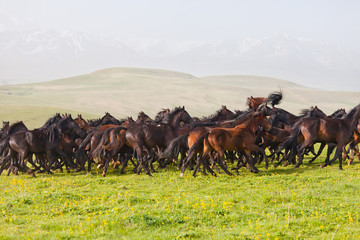 Herd of horses on a summer pasture. Caucasus