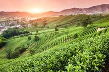 Zielona herbata ogród na wzgórzu, Chiny