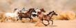 Leinwandbild Motiv Horses herd running in the sand storm