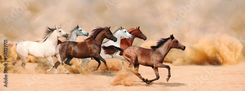 Leinwanddruck Bild Horses herd running in the sand storm