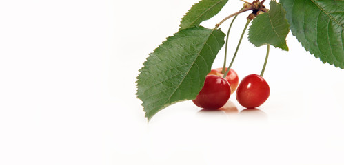 cherries with leaves close up