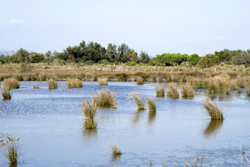 Regional Nature Park of the Camargue, France