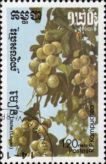 kampuchea tropic fruit postage stamp