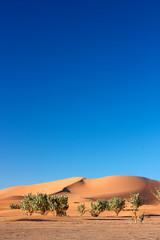Trees in front of dunes of Erg Chigaga desert