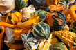 The Harvest of Squashes