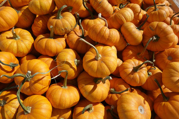 Orange Pumpkins Background