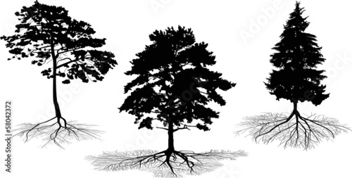 three tree silhouettes with roots