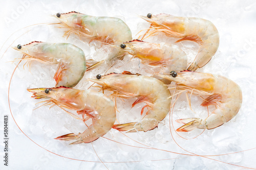 Seven fresh Banana Shrimps setting on ice in white background