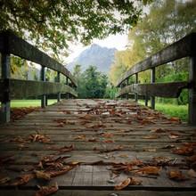 Pont dans le parc