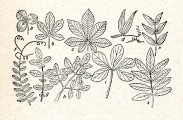 Form of leaves