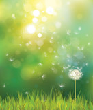 Vector of spring background with white dandelion.