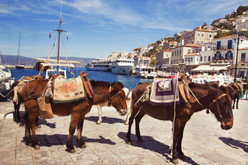 port of Hydra, Greece