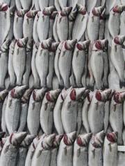 Sorgsam sortierter frischer Fisch auf einem Markt in Istanbul