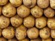 Frisch geerntete Kartoffeln auf einem Markt in Istanbul Erenköy