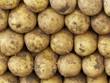Dicke Kartoffeln auf einem Wochenmarkt in Istanbul Erenköy