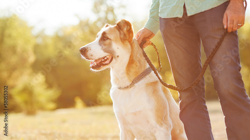 Man and central Asian shepherd walk in the park.