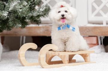 Portrait of a little dog in winter