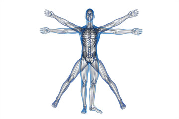 Human body of a Vitruvian man for study on white