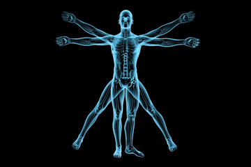 Human body of a Vitruvian man with skeleton for study
