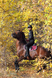 Young woman ride her rearing horse in autumn woods