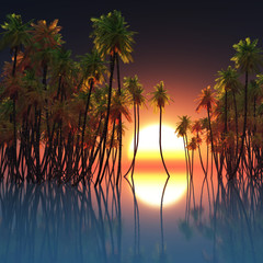 palms in ocean and sunset