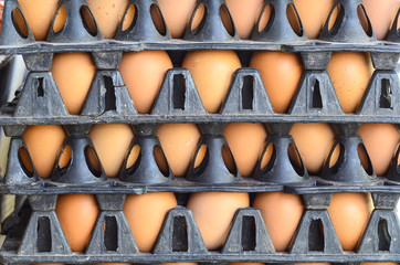 Fresh eggs in packaging stacked
