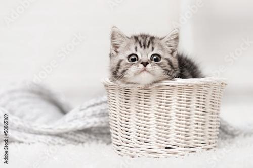 Kitten in a basket © Alexandr Vasilyev