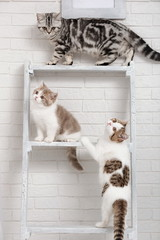 Kittens on the shelves