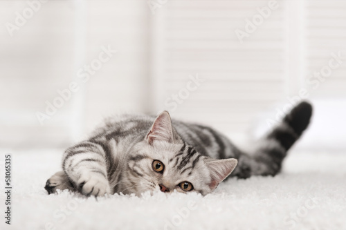 Foto op Plexiglas Kat Cat on the carpet