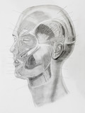 hand drawn pencil side view of human head parts