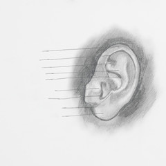 Detail of ear pencil drawing on white paper