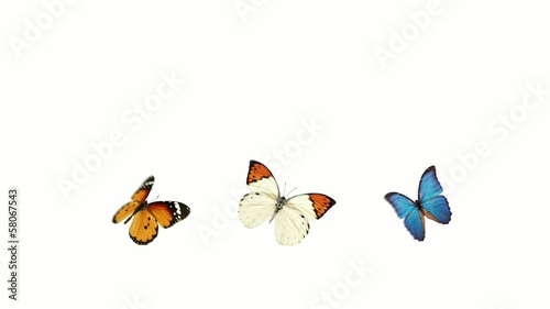 three butterflies with alpha channel