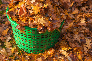 Basket full of autumn leaves