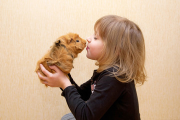 child kissing guinea pig. Love for animals