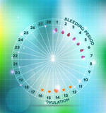 Menstrual cycle wheel. Average menstrual cycle.