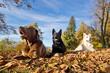 3 Dogs Blue Sky